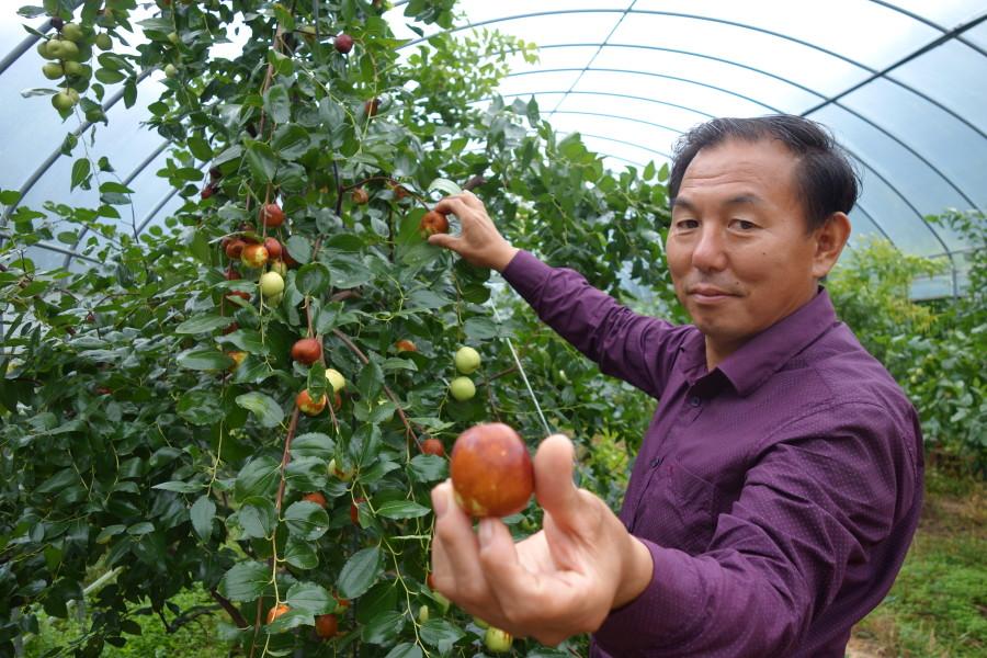 韓国報恩郡ナツメ農園を訪問しました。